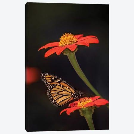 Butterfly Portrait X Canvas Print #PHB28} by PHBurchett Canvas Wall Art