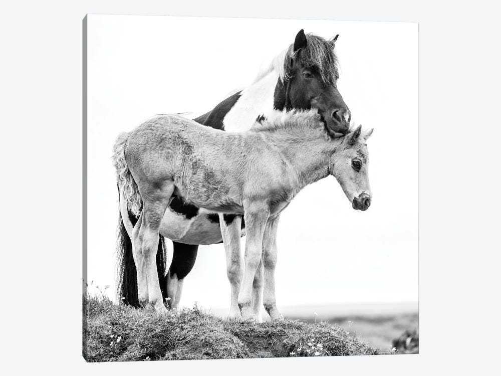 B&W Horses I by PH Burchett 1-piece Canvas Wall Art