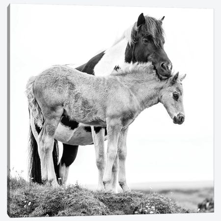 B&W Horses I Canvas Print #PHB2} by PHBurchett Canvas Art