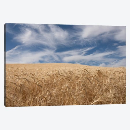 Farm & Field II Canvas Print #PHB31} by PH Burchett Canvas Art Print