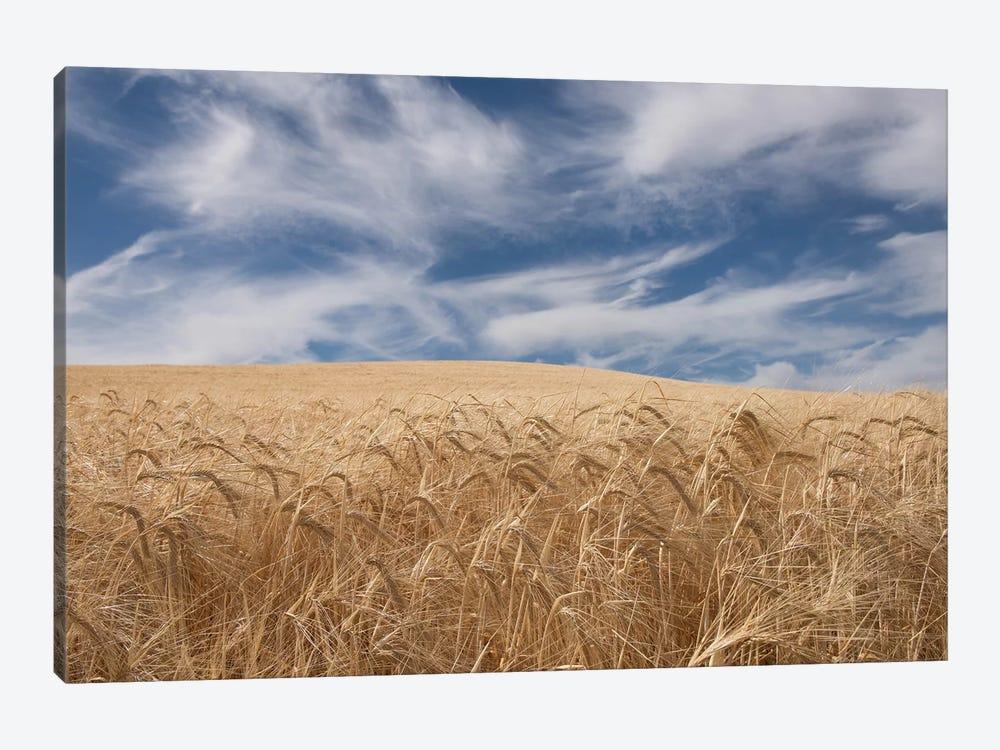Farm & Field II by PHBurchett 1-piece Canvas Artwork