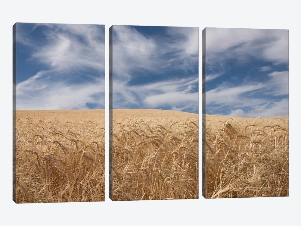 Farm & Field II by PHBurchett 3-piece Canvas Artwork