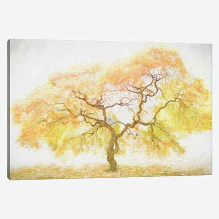 Golden Tree Canvas Print #PHB36} by PH Burchett Canvas Art