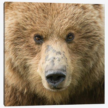 Bear Life I Canvas Print #PHB37} by PHBurchett Canvas Wall Art