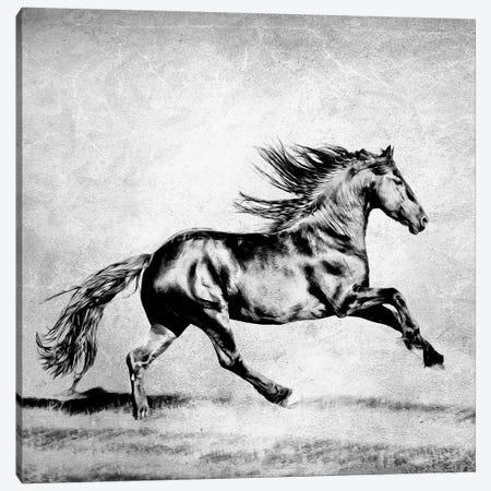 B&W Horses II 3-Piece Canvas #PHB3} by PH Burchett Canvas Art