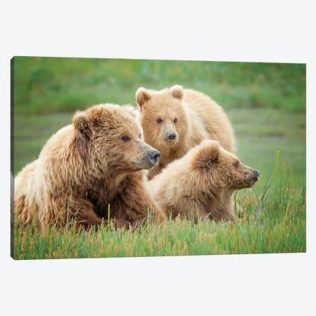Bear Life IX Canvas Print #PHB41} by PHBurchett Canvas Art