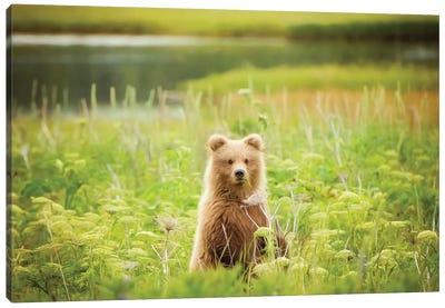 Bear Life VII Canvas Art Print
