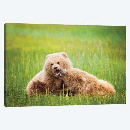 Bear Life VIII Canvas Print #PHB45} by PHBurchett Canvas Art Print