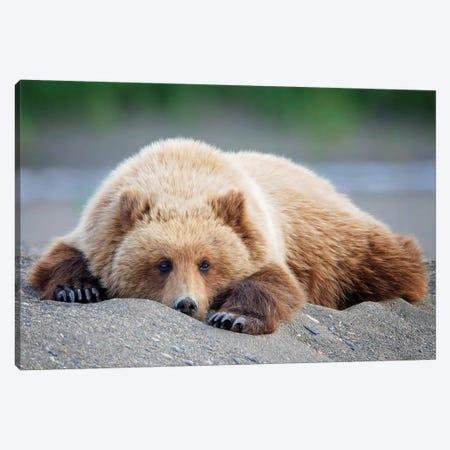 Bear Life X Canvas Print #PHB46} by PHBurchett Canvas Print