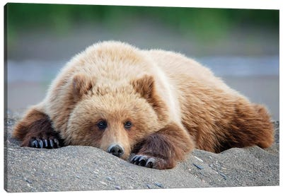Bear Life X Canvas Art Print