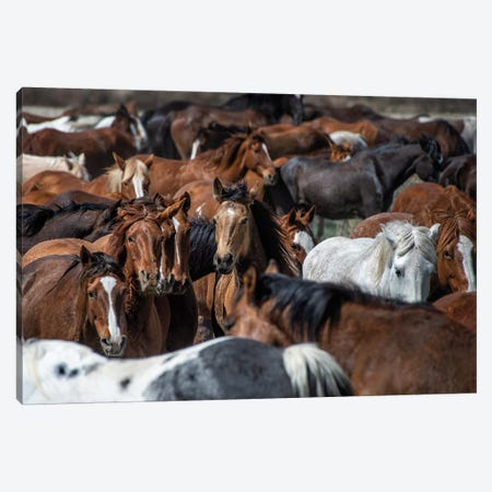 Horse Back Canvas Print #PHB47} by PHBurchett Art Print