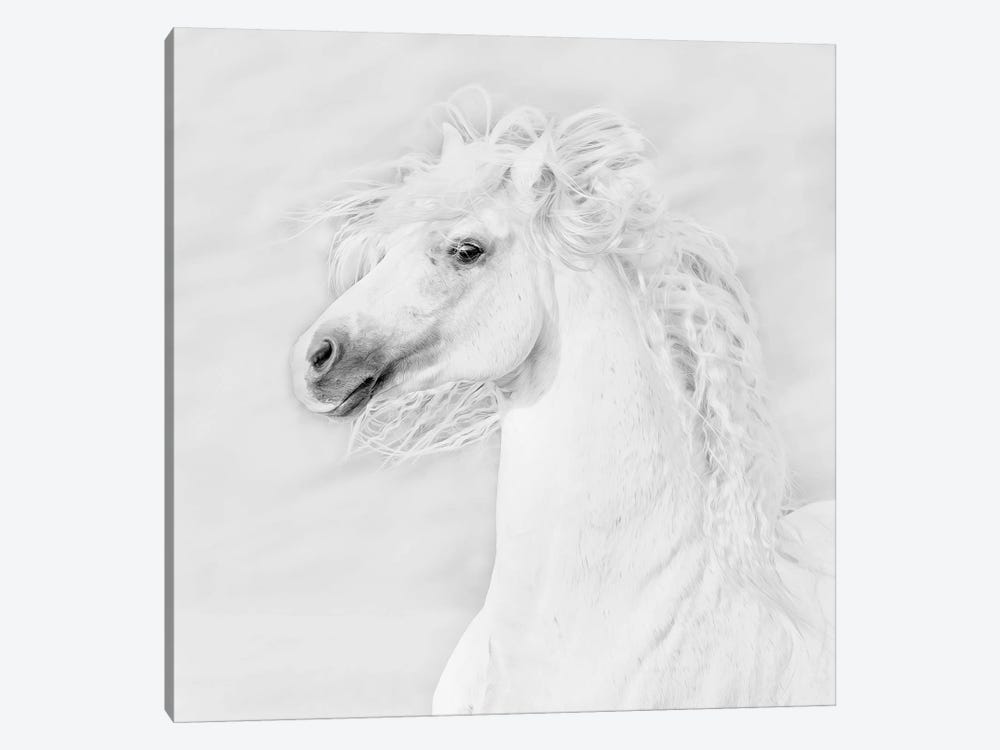 B&W Horses III by PH Burchett 1-piece Canvas Art