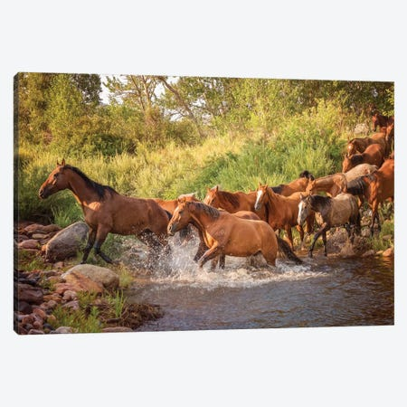 River Horses II Canvas Print #PHB55} by PHBurchett Canvas Wall Art