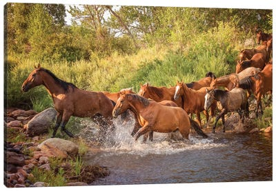 River Horses II Canvas Art Print