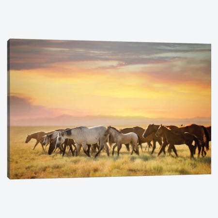 Sunkissed Horses I Canvas Print #PHB56} by PH Burchett Canvas Artwork