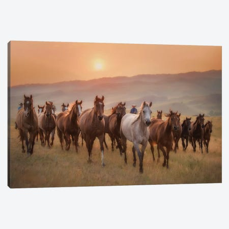 Sunkissed Horses II Canvas Print #PHB57} by PH Burchett Canvas Art
