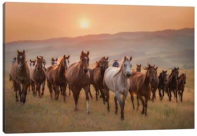 Sunkissed Horses II Canvas Art Print