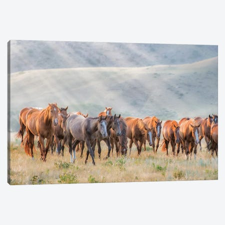 Sunkissed Horses III Canvas Print #PHB58} by PHBurchett Art Print