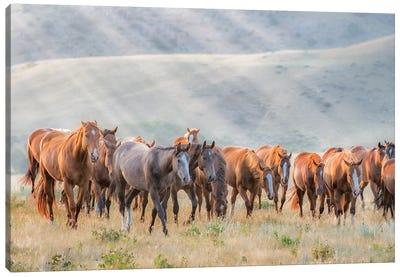 Sunkissed Horses III Canvas Art Print
