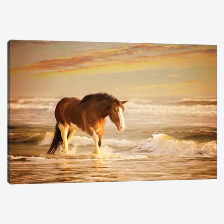 Sunkissed Horses V Canvas Print #PHB60} by PH Burchett Canvas Wall Art