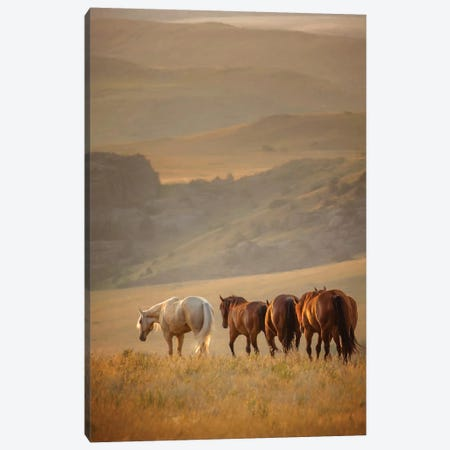 Sunkissed Horses VI Canvas Print #PHB61} by PH Burchett Canvas Artwork