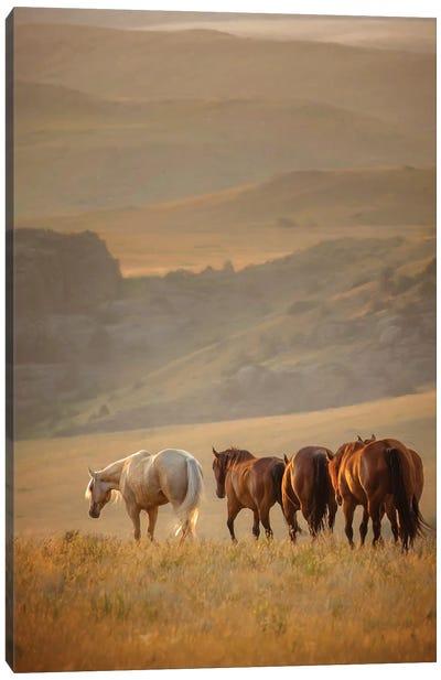 Sunkissed Horses VI Canvas Art Print