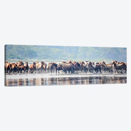 Water Horses II Canvas Print #PHB63} by PHBurchett Canvas Art