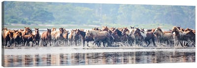 Water Horses II Canvas Art Print
