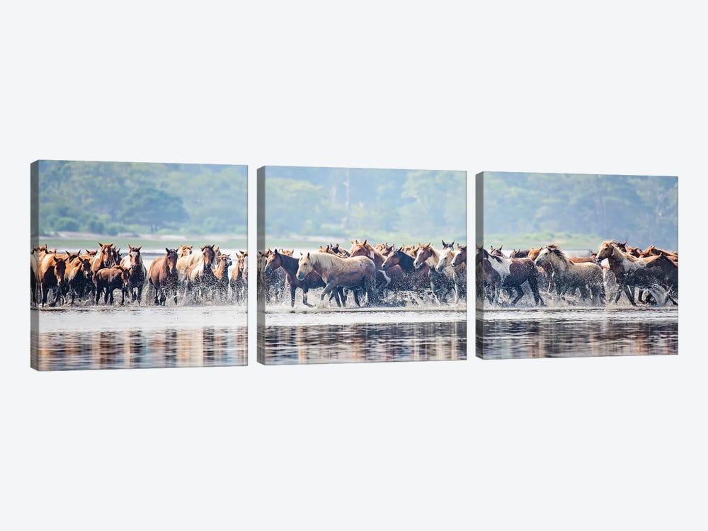 Water Horses II by PHBurchett 3-piece Canvas Print