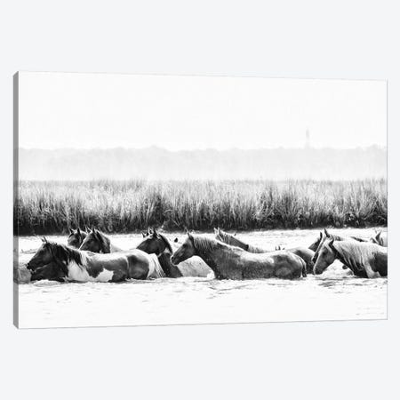 Water Horses III Canvas Print #PHB64} by PH Burchett Canvas Print