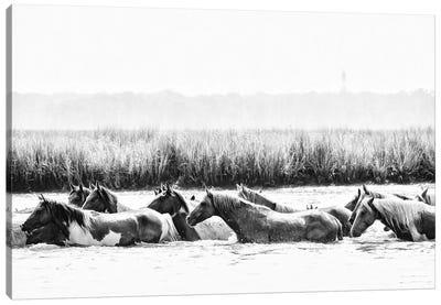 Water Horses III Canvas Art Print