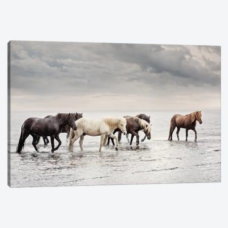 Water Horses IV Canvas Print #PHB65} by PHBurchett Art Print