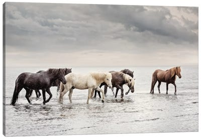 Water Horses IV Canvas Art Print