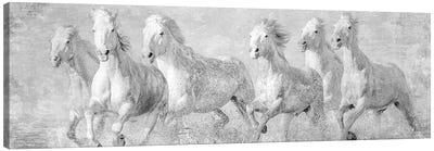 Water Horses V Canvas Art Print