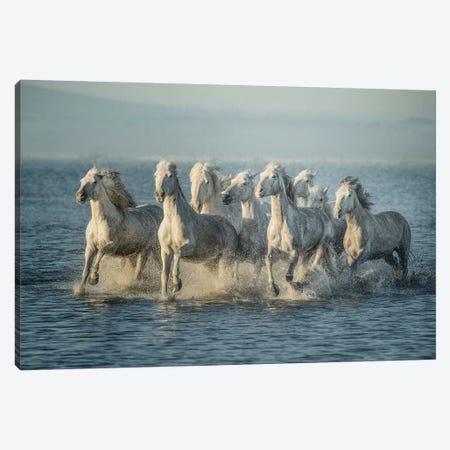 Water Horses VI Canvas Print #PHB67} by PHBurchett Art Print