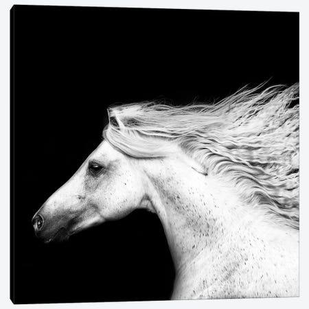 B&W Horses V Canvas Print #PHB6} by PH Burchett Canvas Art Print