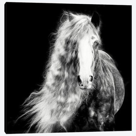 Black and White Horse Portrait I Canvas Print #PHB72} by PHBurchett Canvas Art Print