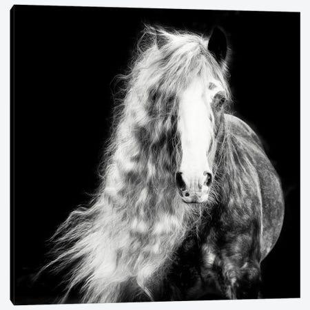 Black and White Horse Portrait I Canvas Print #PHB72} by PHBurchett Canvas Art Print