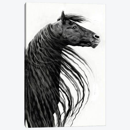 Black and White Horse Portrait II Canvas Print #PHB73} by PHBurchett Canvas Print