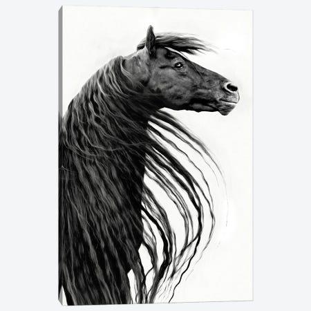 Black and White Horse Portrait II Canvas Print #PHB73} by PHBurchett Canvas Print