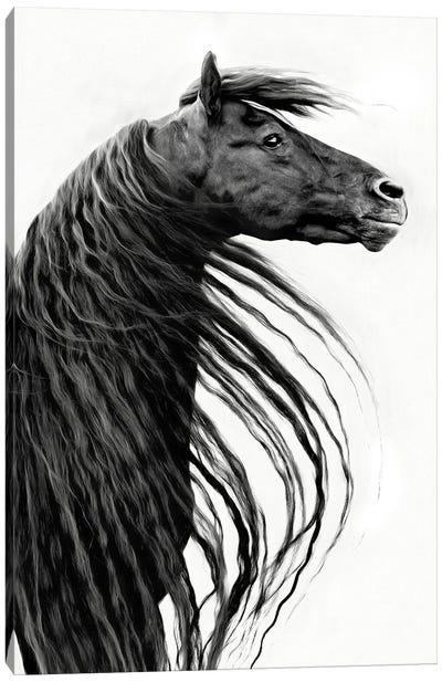 Black and White Horse Portrait II Canvas Art Print