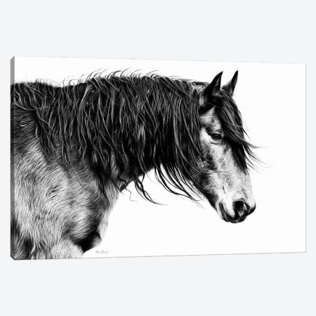 Black and White Horse Portrait III Canvas Print #PHB74} by PHBurchett Canvas Wall Art