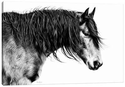 Black and White Horse Portrait III Canvas Art Print