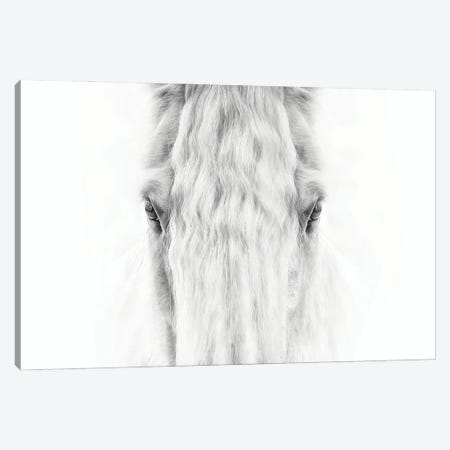 Black and White Horse Portrait IV 3-Piece Canvas #PHB75} by PH Burchett Canvas Art