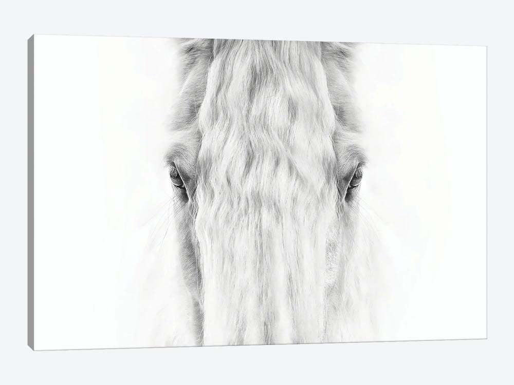 Black and White Horse Portrait IV by PHBurchett 1-piece Canvas Artwork