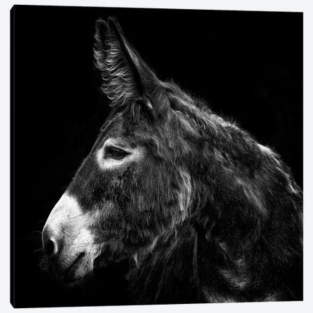 Donkey Portrait I Canvas Print #PHB76} by PHBurchett Canvas Art