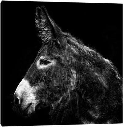 Donkey Portrait I Canvas Art Print