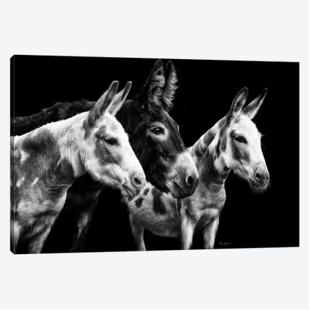 Donkey Portrait II Canvas Print #PHB77} by PHBurchett Canvas Artwork