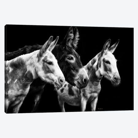Donkey Portrait II Canvas Print #PHB77} by PHBurchett Canvas Artwork
