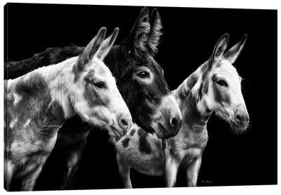 Donkey Portrait II Canvas Art Print